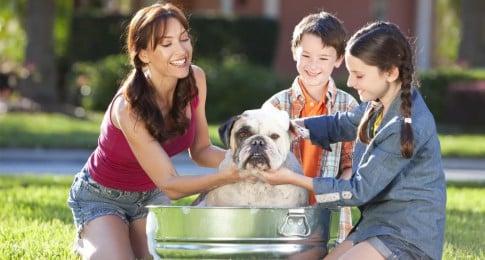 animaux domestiques et regles d'hygienes
