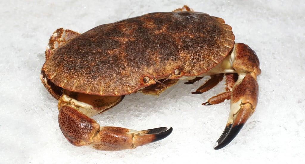 crabe_57491350_web
