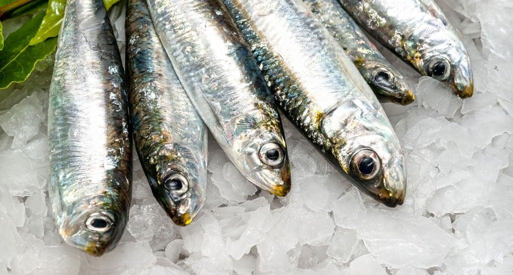 sardine_141767332_web