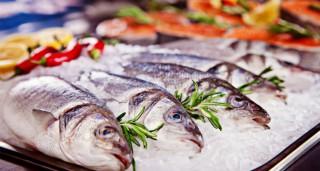 Mieux connaître les poissons