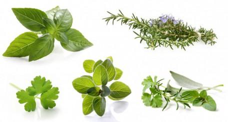 A la découverte des herbes aromatiques !