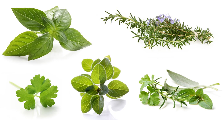 Herbes Aromatiques De Grandes Qualites Nutritionnelles