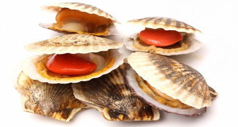 coquilles_st_jacques_182066294